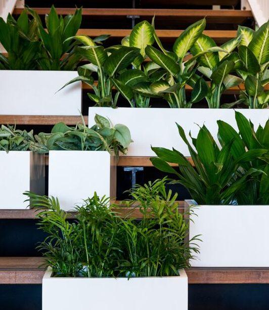 Aranżacje zieleni w biurach - białe doniczki